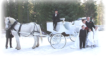 Horse and carriage photo